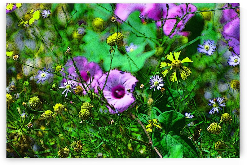 Wildflowers by Ann Ciarico