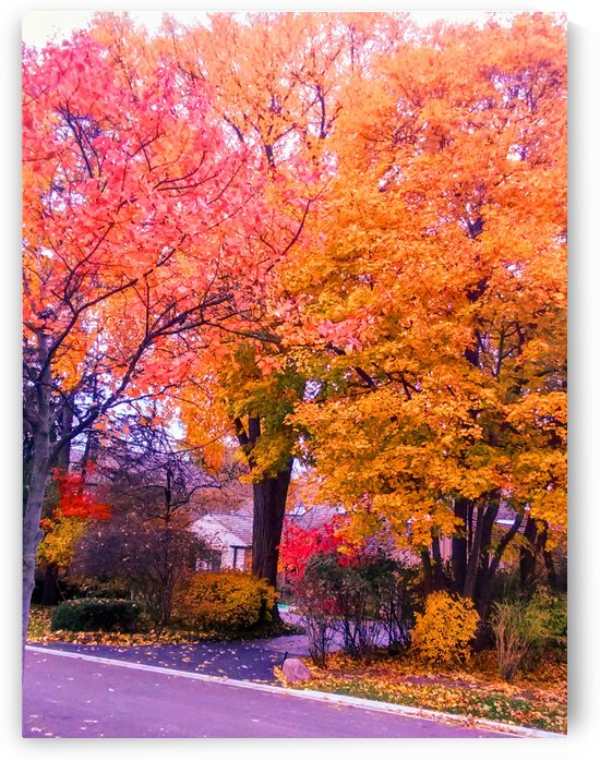 Autumn fire by Ann Ciarico