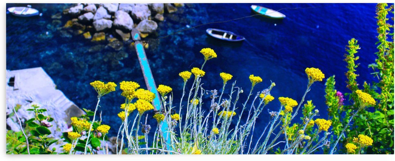 Yellow Flowers and a blue ocean by Bentivoglio Photography