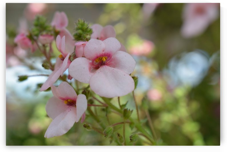 Pink Flowers Photograph by Katherine Lindsey Photography