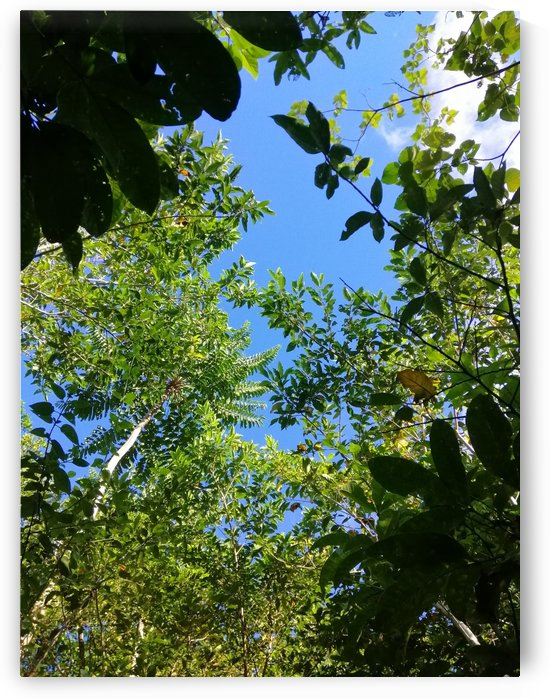 Leaves  by Karen
