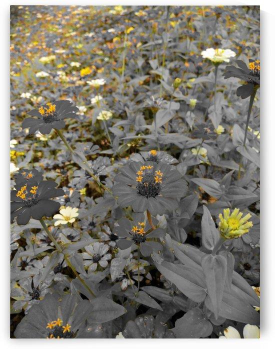 Black flowers  by Karen