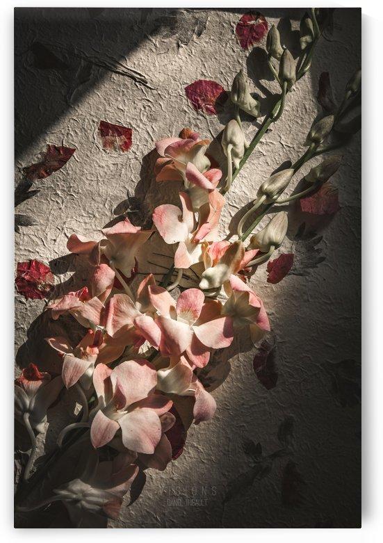 La tendresse attendra by Daniel Thibault artiste-photographe