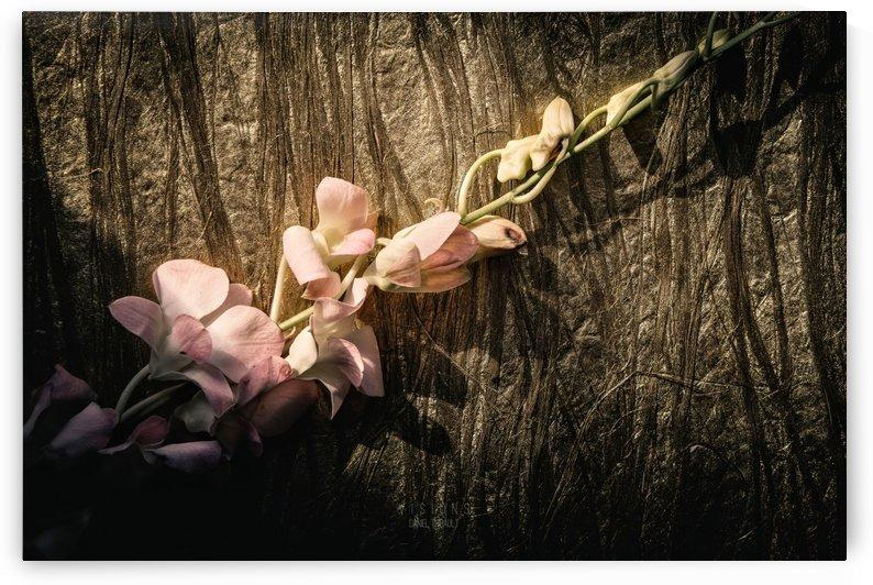 LOr qui brille dans la nuit by Daniel Thibault artiste-photographe