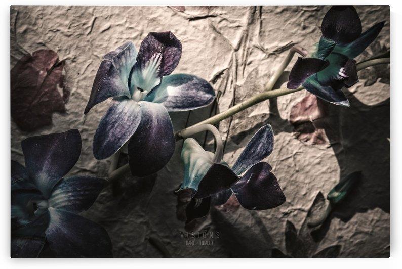 Fleur de Février by Daniel Thibault artiste-photographe