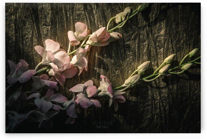 Ce qui fleurira by Daniel Thibault artiste-photographe