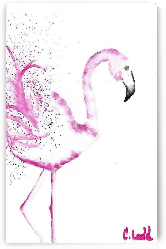 flamingo  by Corinne Ladd