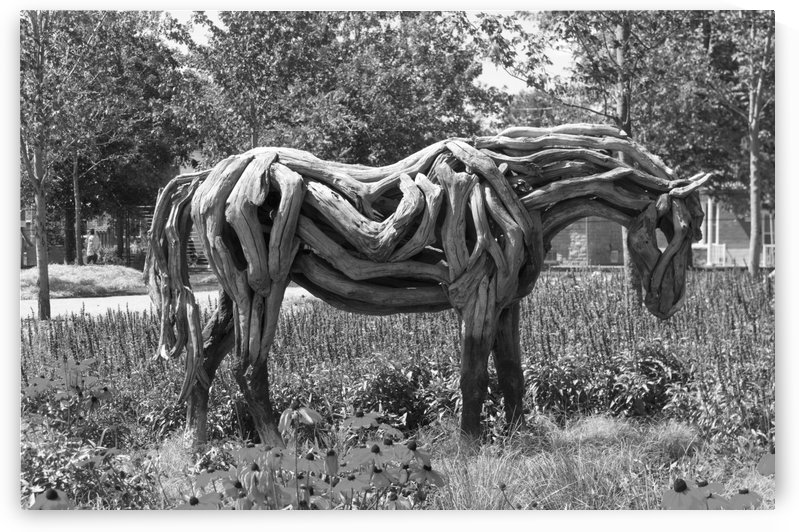 Odyssey the horse sculpture made of driftwood by Heather Jansch b&w by Bob Corson