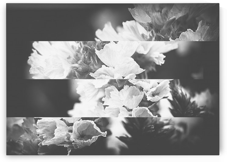Flower Bells Collage BnW by Ira Silence