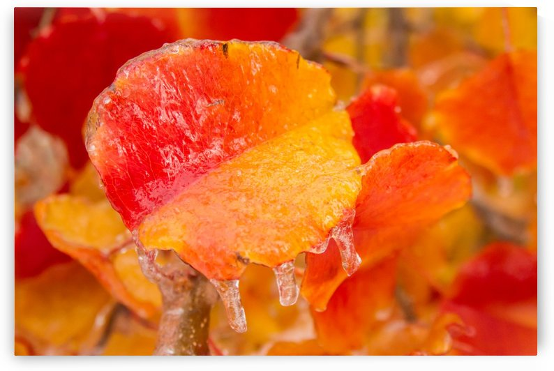 Fire and Ice by Terry Walsh Images