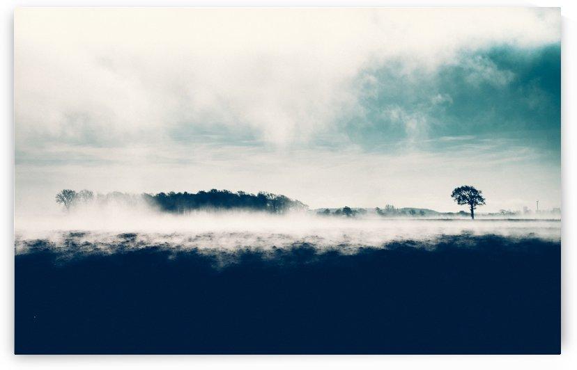 True twilight by Conny Palmkvist