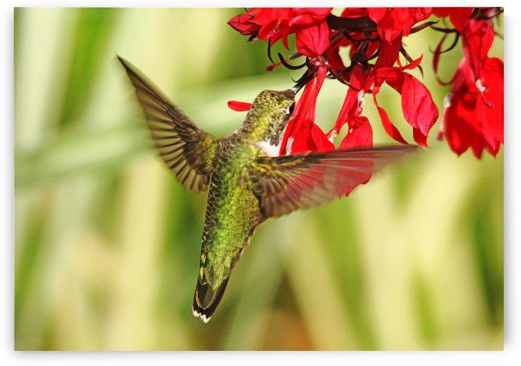 Golden Green Garden Jewel by Deb Oppermann