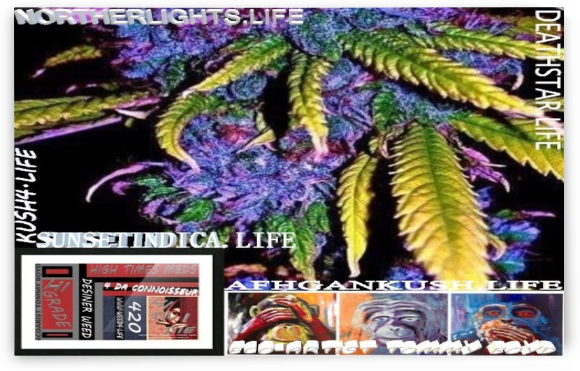 ECO ARTIST TOMMY BOYD HIGH TIME MEDS WEBSITE CANNABIS PIC WITH LOGO WIDE by KING THOMAS MIGUEL BOYD