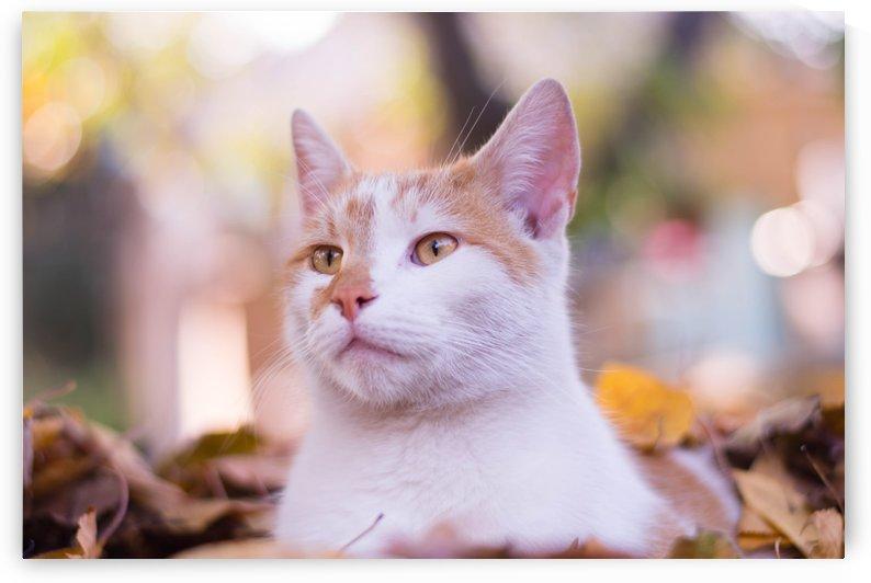 My cat Matthias by zsofiapeto