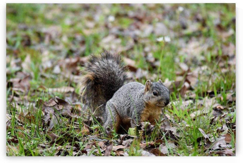 Squirrel 2 by LambySnaps