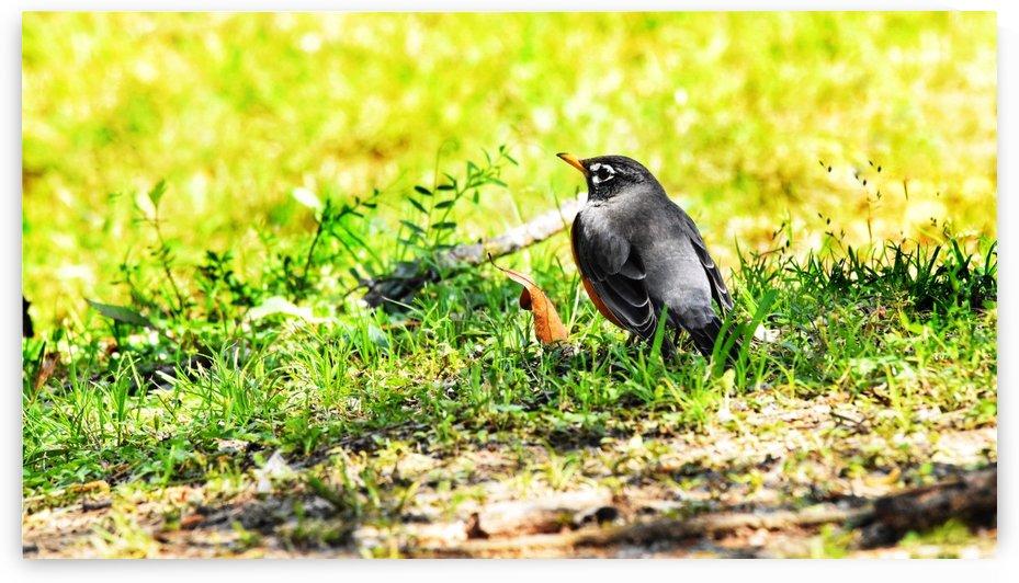Vivid Robin by LambySnaps