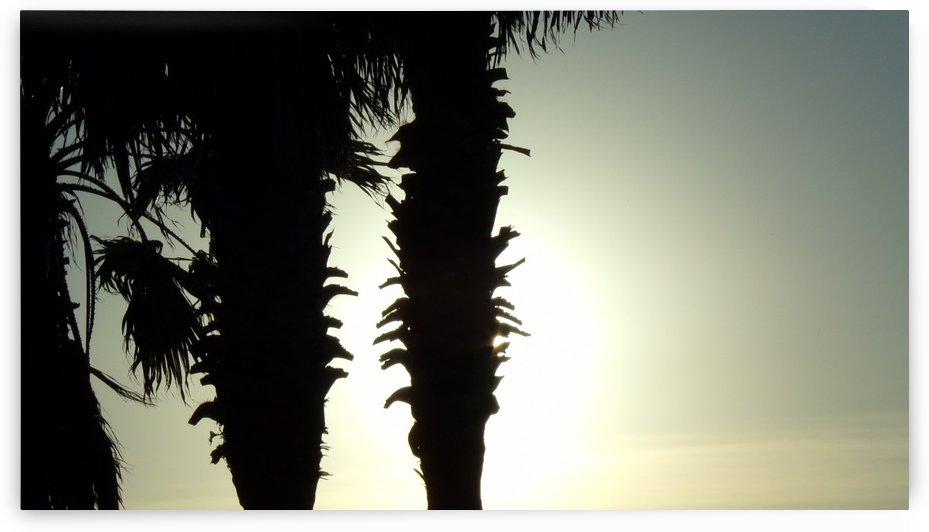 Sunlit Palms by Jolan Cecil
