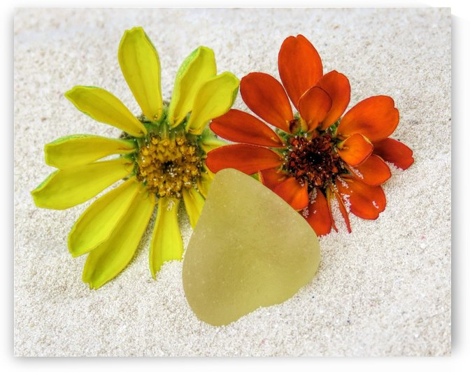 Pale yellow sea glass and zinnias by Photography by Janice Drew