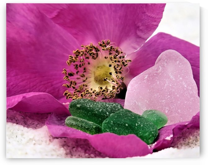 Sea glass and beach rose by Photography by Janice Drew