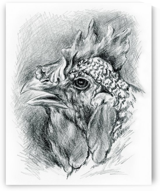 Plymouth Barred Rock Hen in Charcoal by MM Anderson