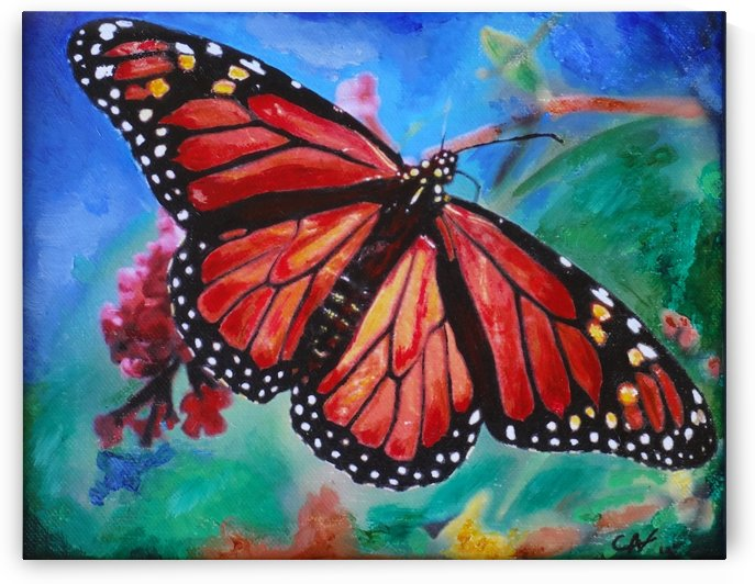 Colorado Butterfly by Chris Rutledge