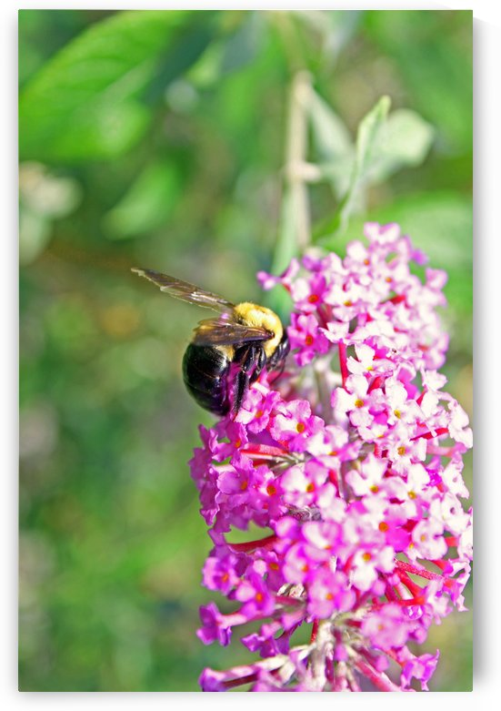 Bumblebee on a Flower by Gods Eye Candy