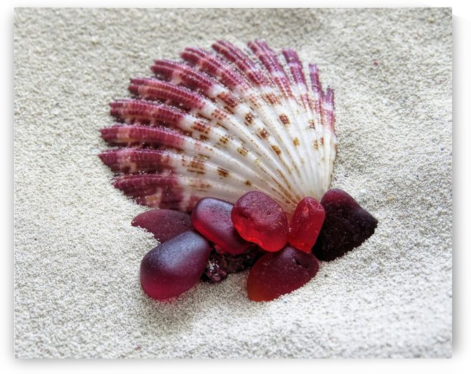 Sea glass and seashell in reds by Photography by Janice Drew