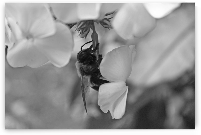 Hanging with a Flower B&W by Gods Eye Candy