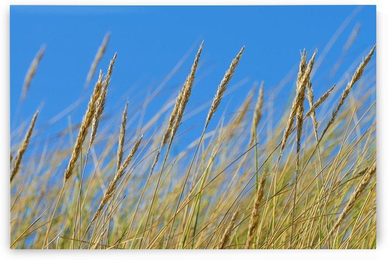Grasses by Kirsten Warner