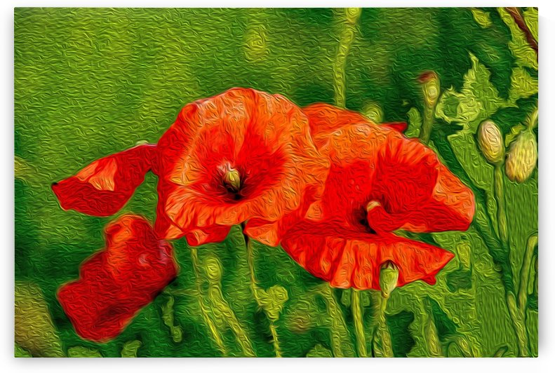 Red Poppies by Kirsten Warner