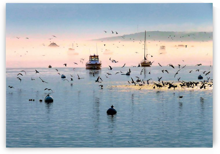 Fog Sea Sun and Seagulls by Photography by Janice Drew