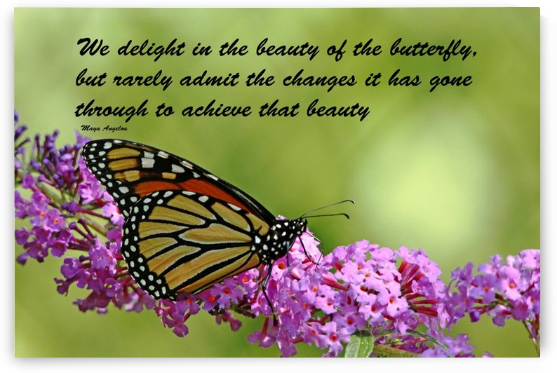 The Beauty Of The Butterfly by Deb Oppermann