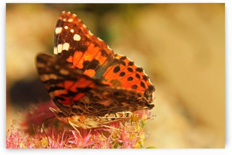 Un Papillon by Gods Eye Candy