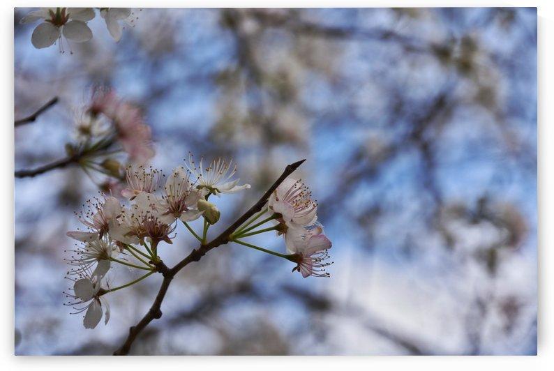 Spring Flowers by LambySnaps