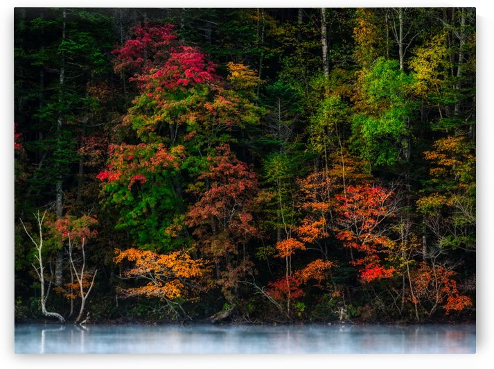 Lake Side Autumn Forest Fog by Wander Eddie