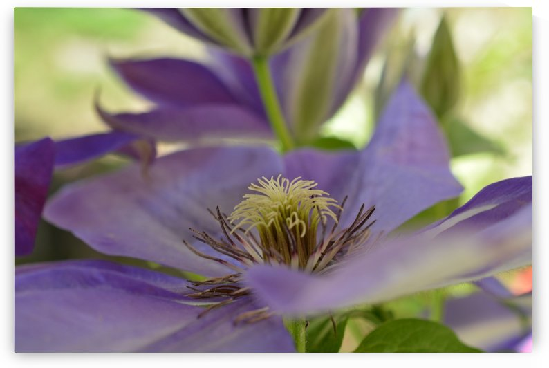 Purple Flower Photograph by Katherine Lindsey Photography