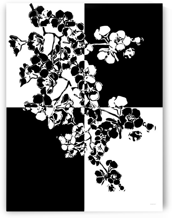 Black and White Blossoms Abstract  by Gabriella David