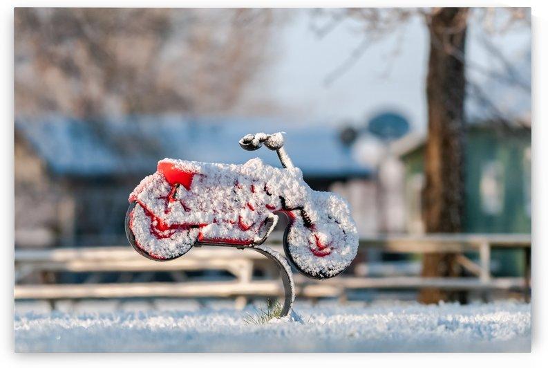 Spring Park Toy by Garald Horst