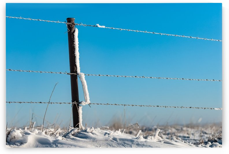 Wire Frost Drifts by Garald Horst