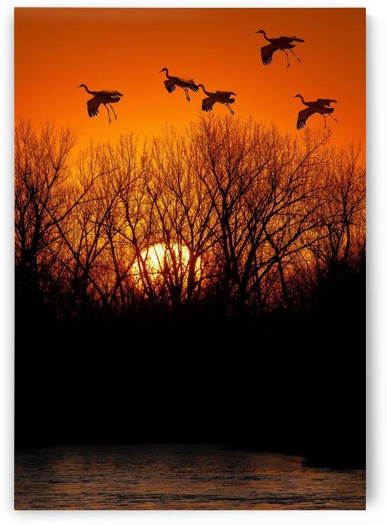 Dawn patrol over the Platte by James Radford
