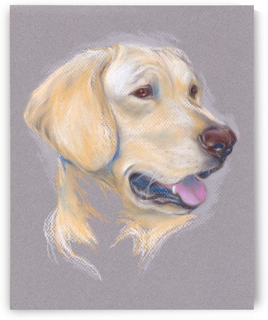 Yellow Labrador Retriever by MM Anderson