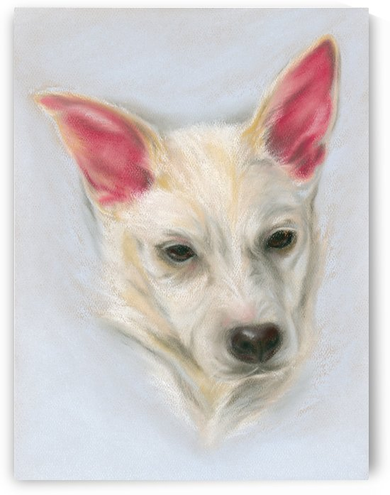 Young Carolina Dog by MM Anderson