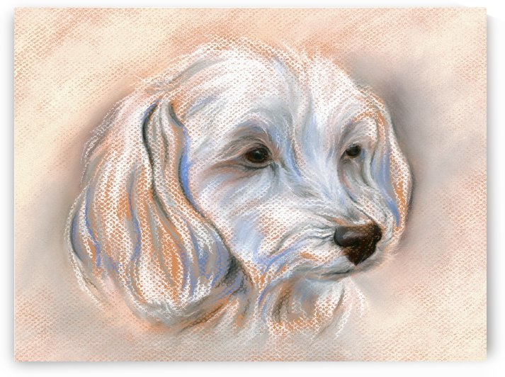 Maltipoo Dog Portrait by MM Anderson