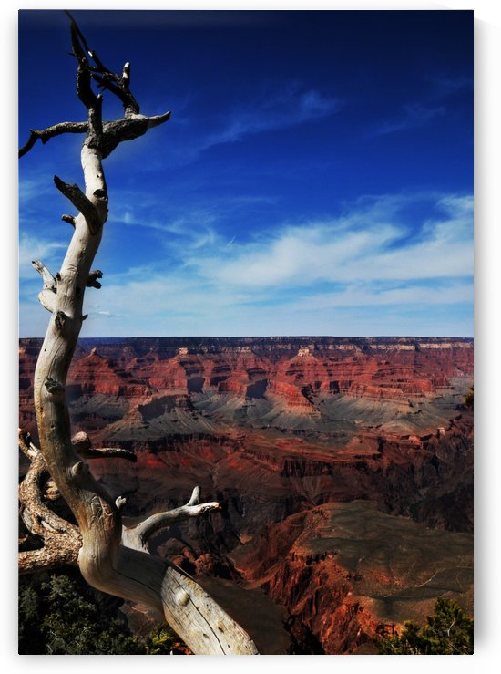 Grand Canyon framed by tree by Alexandra Draghici