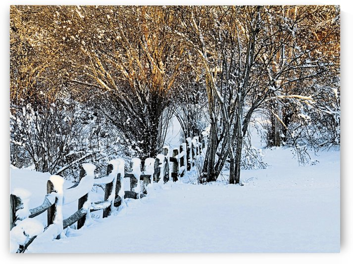 Winter golds and white by Photography by Janice Drew