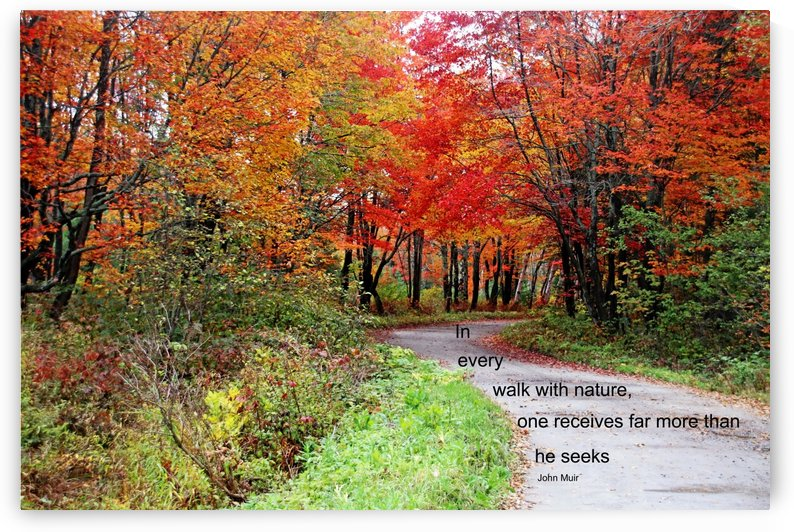 Walk With Nature by Deb Oppermann