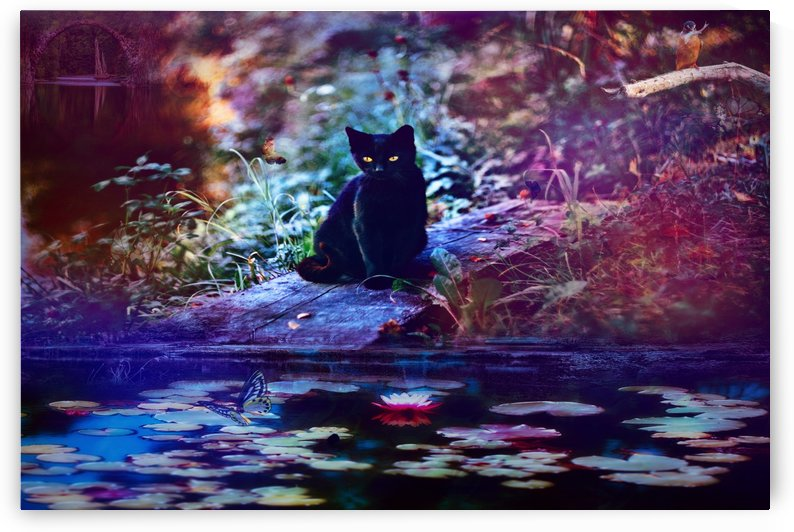 Kitty by the pond by Elizabeth Berry