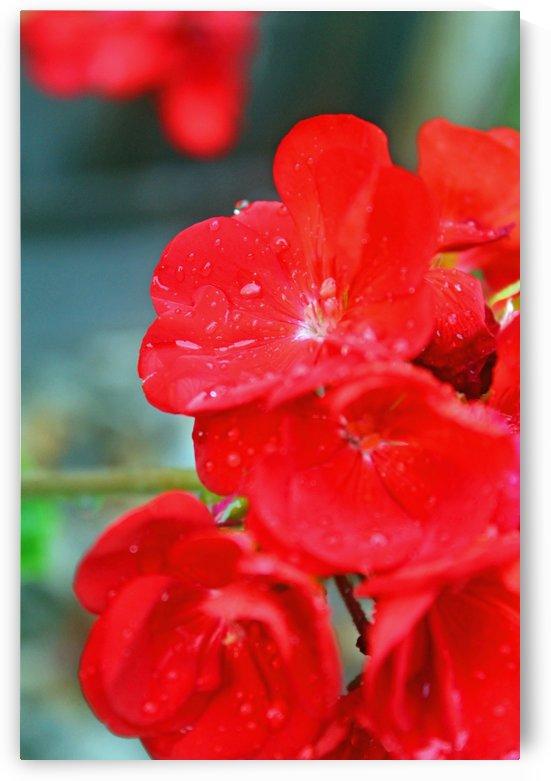 Elegantly Red by Gods Eye Candy