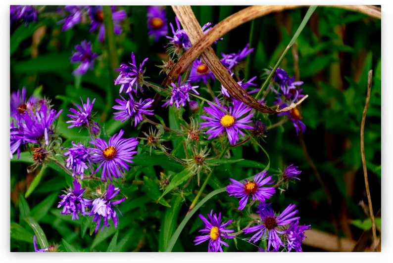 Wildflowers 3 of 3 by William Norton Photography