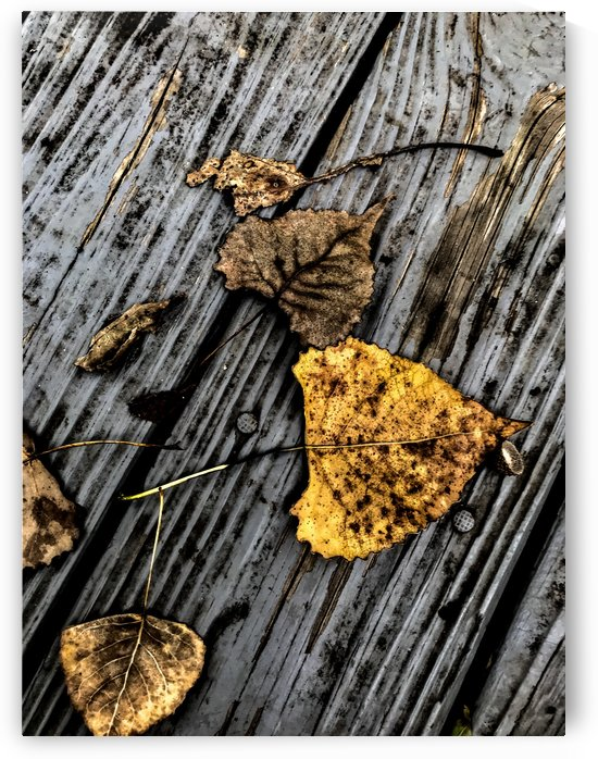 Autumn by William Norton Photography